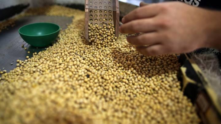 В Россию разрешен ввоз ГМО-продукции